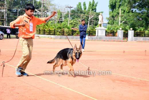 dog-show8