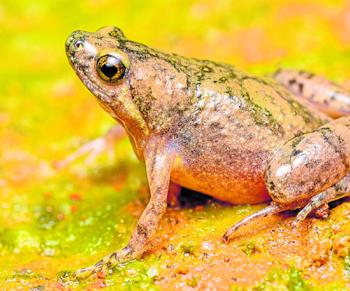 frog.j