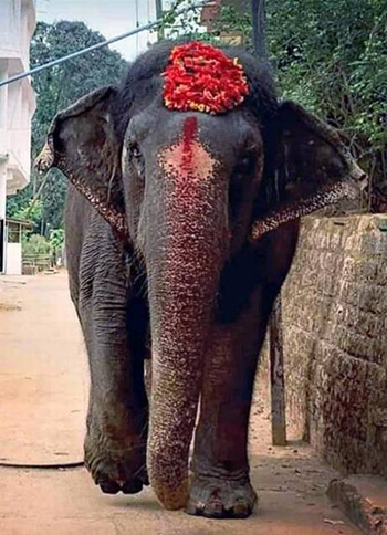 elephant.j