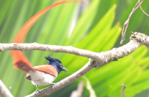 Manipal Bird Day 2020