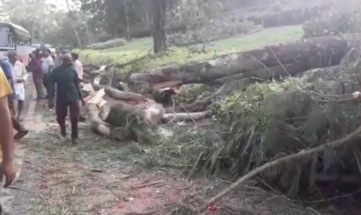 Beltangady: 2 youth killed after tree falls on moving car