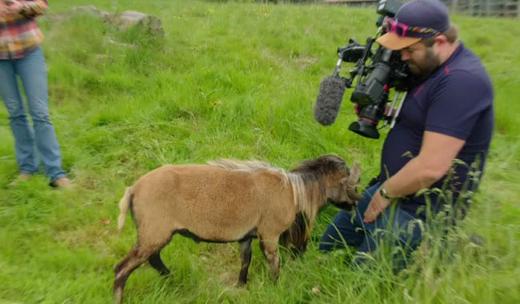 goat-attack