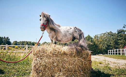 horse-1.jpg