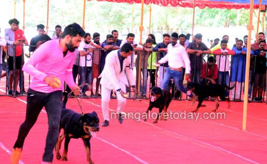 dog-show2dec19...