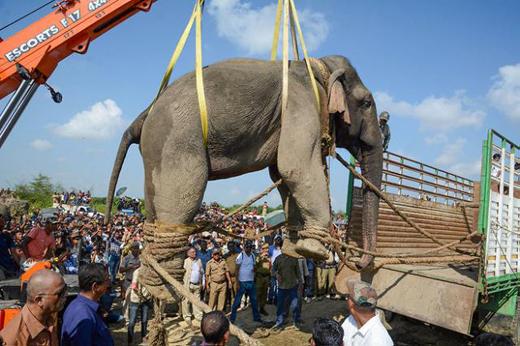 elephant18nov1..