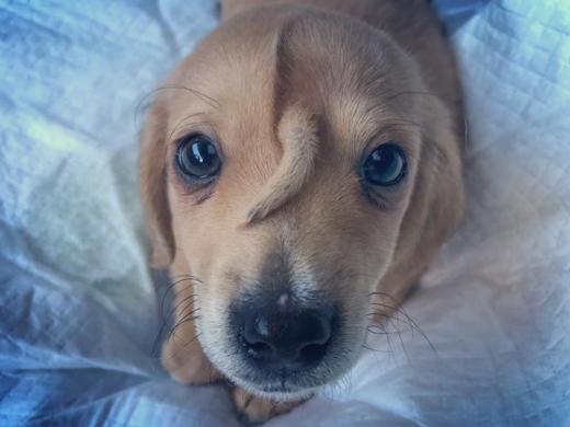 puppy15nov19-1...