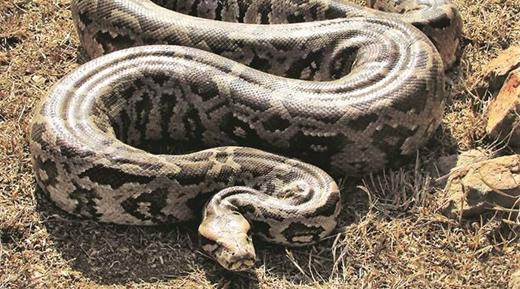 python19oct19.jpg