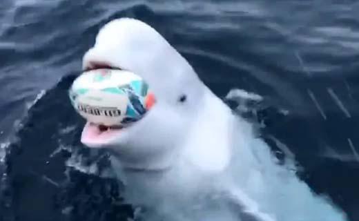 whale8nov19.jpg