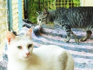 kasargod cats