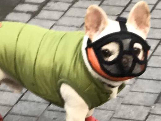 pets-wearing-mask