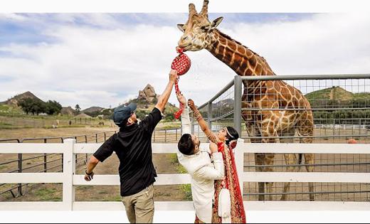 Giraffe16march2020