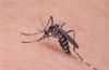 46 more cases of Dengue in Dakshina Kannada