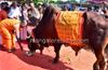 Two-day Gomandala begins at Nehru Maidan