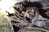 Kundapur : Skeletal remains found in locked shed at Kumbashi