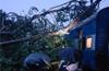 Udupi : Tree branch falls over Netravathi Express ; none hurt