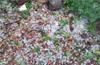 Heavy rains, hailstorm in Subrahmanya