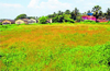 'Ranga Mandira'  still a dream in Udupi dist