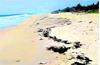 DK fishermen panic over 'tar balls' on shores
