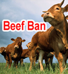 Beef Ban: What Are The Cows Really Getting Out Of It?
