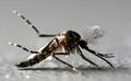 Dengue menace intensifies in Jammu as 109 tested positive