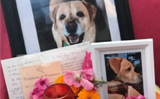 Indian comes from New Zealand to immerse dog�s ashes in Ganga, performs last rites