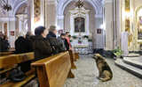 Dog attends mass every day where his owner�s funeral was, hoping she�ll return
