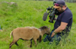 Angry goat smacks BBC cameraman in viral video, Internet in splits