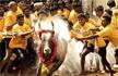 Jallikattu, Tamil Nadu�s bull-taming sport, begins in Madurai after authorities review arrange
