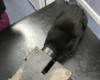 Curious Cat Gets Head Stuck In Rat Trap
